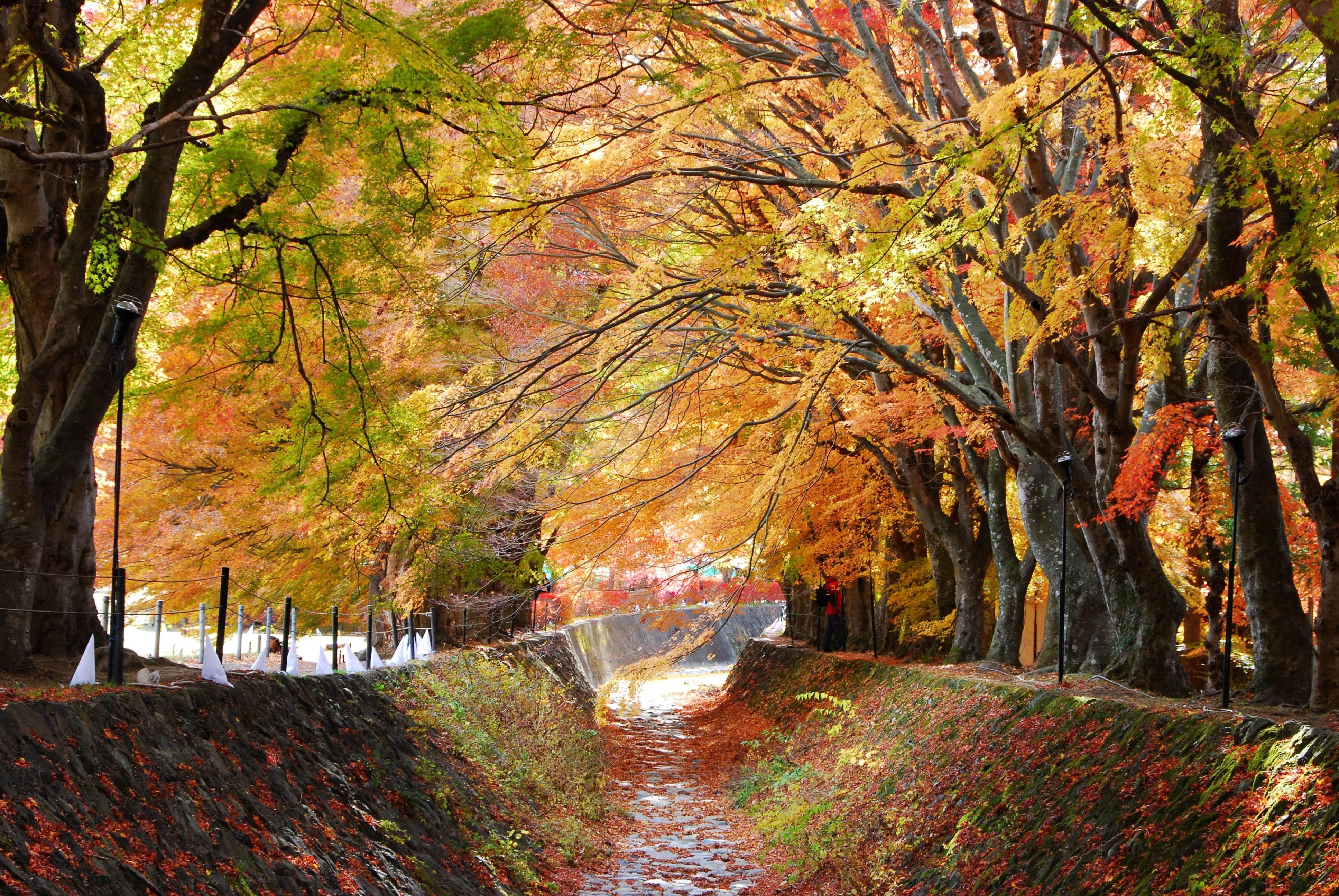 东京图片大全风景