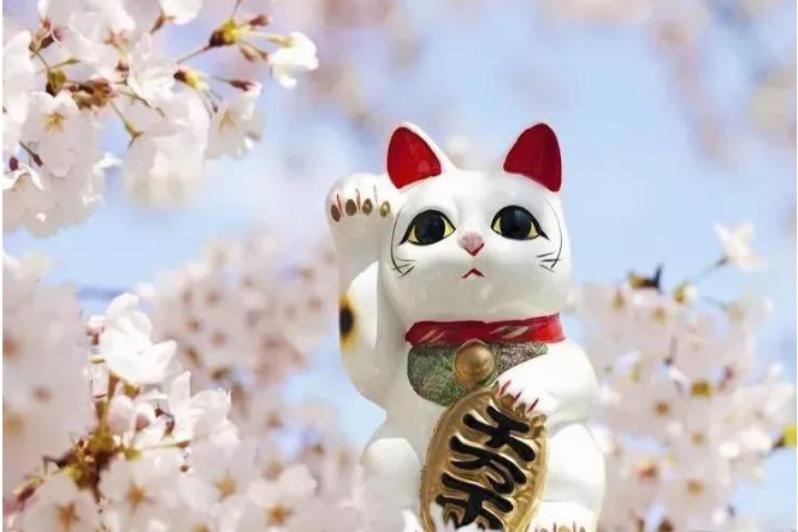 杭州日语学习培训,日本人到底有多爱猫?走近日本的猫文化