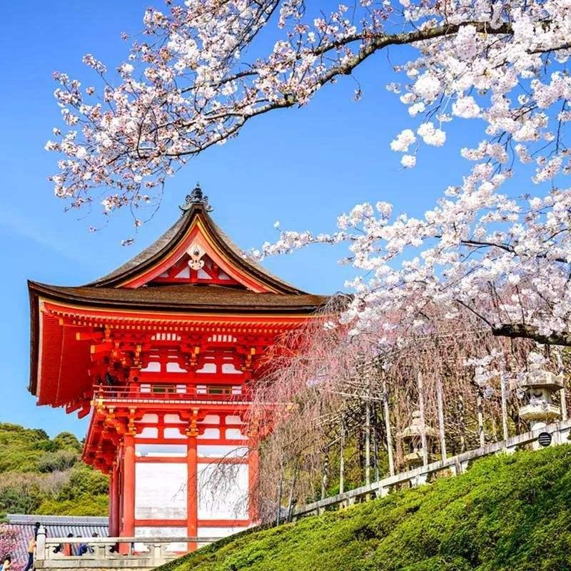 日语学习丨进阶阶段番剧及日剧推荐