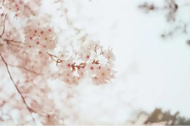 日语考试中常见的60个惯用搭配 | 日语学习干货